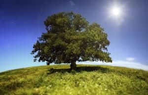 Tree-in-a-Green-Field-Medium-iStock