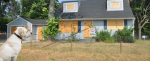 Abandoned Pets Due To Foreclosure